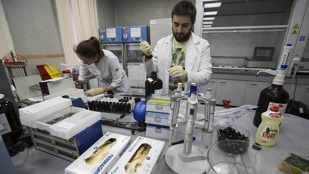 Světová antidopingová agentura (WADA) povolila Rusku, aby se znovu začalo podílet na dopingových kontrolách.