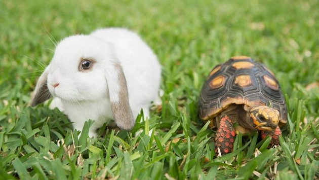Želva a zajíc spolu tentokrát nezávodili.