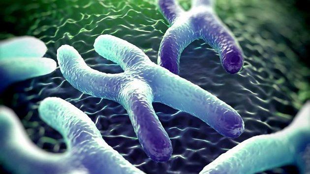 Telomery chránící chromozom mají běžci delší.