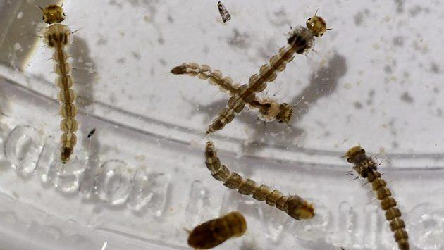 V Riu se během olympiády nevyskytl žádný případ nákazy zikou.