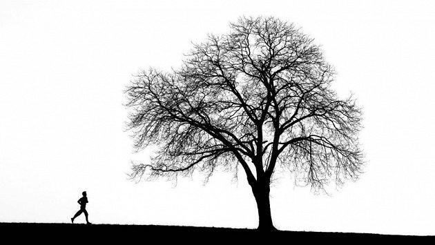 Běh a stromy mají více společného, než si možná myslíte.