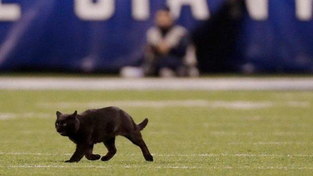 Utkání NFL na hřišti New Yorku Giants narušila černá kočka