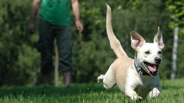 Běhání se psem nabízí spoustu radosti.