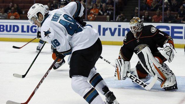 Útočník San Jose Sharks Tomáš Hertl během přípravného duelu s Anaheimem.