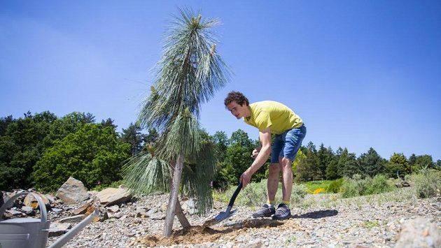Adam Ondra vysadil v Botanické zahradě v Praze-Troji borovici arizonskou.