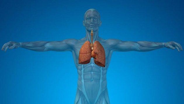 Plíce potřebují být zásobeny. Když se správně naučíte dýchat, poběží se vám o poznání lépe.