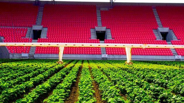 V přerušené lize našla Slavia pro svůj fotbalový svatostánek nové využití.