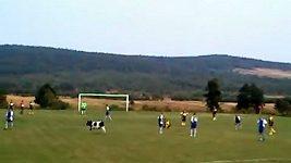 Kráva na fotbalovém hřišti