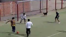 Pes dal v Argentině gól