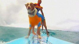 Setkání surfařů v Austrálii