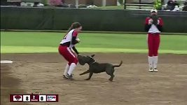Pes na softballu