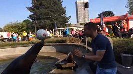 Lukas Podolski si hlavičkoval s lachtanem.