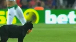 Černá kočka na Nou Campu
