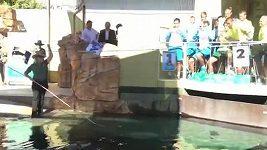 Krokodýl vylosoval Davis Cup.
