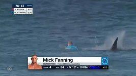 Surfaře napadl žralok v přímém přenosu