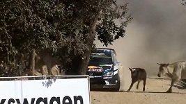 Ogier se v Mexické rallye vyhnul stádu krav