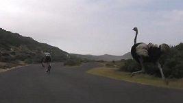 Pštros proháněl cyklisty