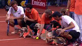 Tenistům sbírají míčky psi