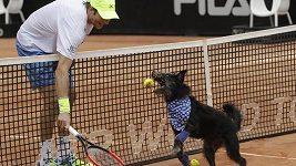 Na tenisovém turnaji v Sao Paulu podávali míčky hodně neobvyklí sběrači
