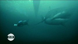 Michael Phelps mezi žraloky