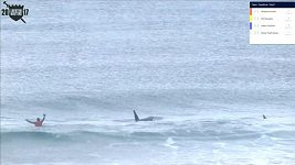Kosatky vyhnaly surfaře z vody