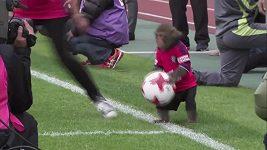 Senzace v japonské lize, na svědomí ji měl opičák