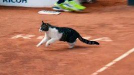 Čtvrtfinále čtyřhry v Římě narušila kočka
