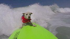 Netradiční surfařský závod v Kalifornii