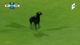 Hvězdou ligového utkání byl pes