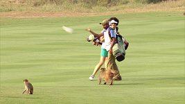 Golfistku Mätzlerovou obtěžovaly na greenu opice