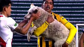 Fotbalový zápas přerušil pes