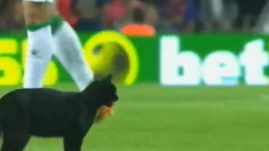 tmavě černá kočička videa